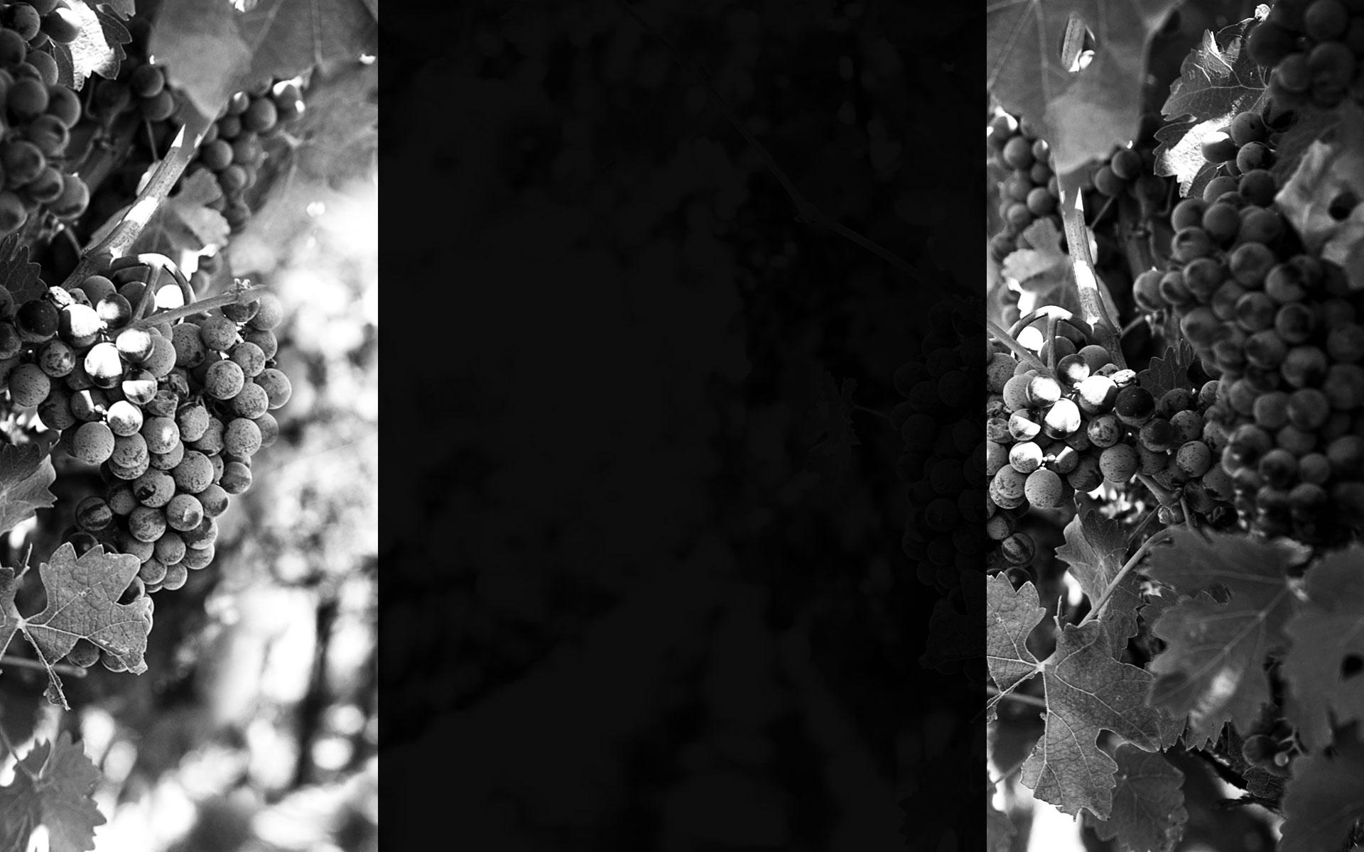 Travaux viticoles «fait main»